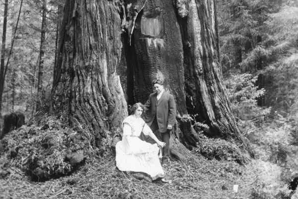 black and white image of a couple seated under a redwood tree