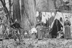 historical black and white image of a family camping in the redwoods