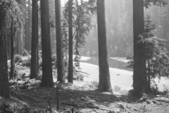 Eel river through the trees - black and white