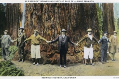 President Hoover and a group holding hands surrounding a redwood tree